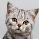 Кошкам наследство 150x150 Владельцы котов и собак в Дубаи все чаще выбирают акупунктуру