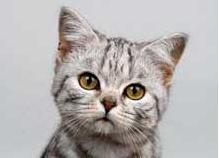 Кошкам наследство Кошкам достался дом в наследство за €122 000