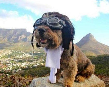 Пес путешественник